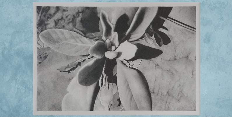 black and white image of a plant