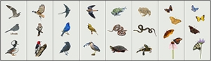 Birds, and other small animals on a neutral background