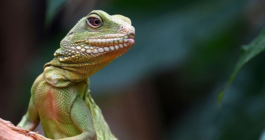 photo of a lizard